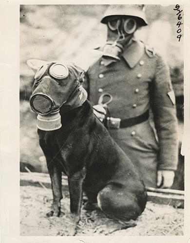 WWI dog gasmask