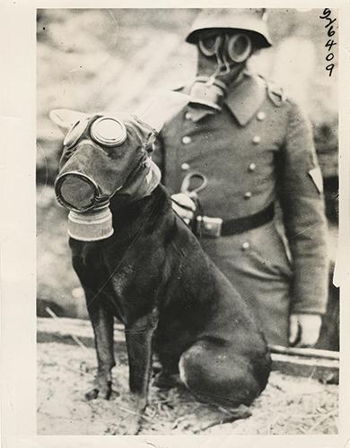 WWI dog gasmask
